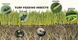 Turf Insecticide Applications